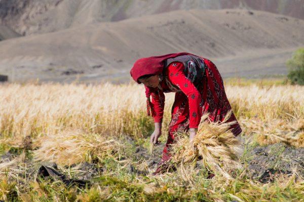 """مبادرة فاطمة بنت محمد بن زايد تدشن إنتاج """"مزارع ميرة """" في أفغانستان"""
